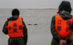 10名全国政协委员联名提案,将长江江豚保护级别提升为一级