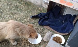 北京一小区流浪狗咬伤人,长期喂养者被判赔偿医疗费并道歉