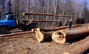 国家林业局:中国已全面停止天然林商业性采伐