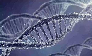 广医三院:编辑人类胚胎基因以治疗严重遗传病符合伦理要求