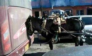 """澎湃联播 """"我有一头小毛驴,我从来也不骑"""""""