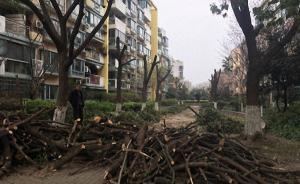 上海一小区10多棵香樟树遭剃头,涉事绿化企业被罚款