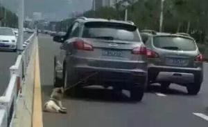 网曝山东一轿车车主拖行小狗致死,警方回应:已到现场调查