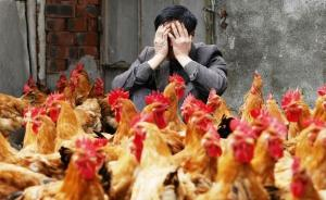 世界动物卫生组织:禽流感控制难度很大,中国的防控计划全面