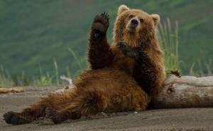 美国一动物保护区对全部动物实施安乐死,引发广泛争议
