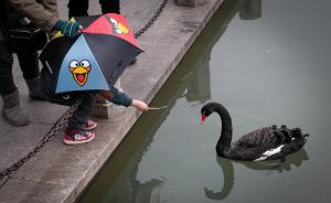 有一说|黑天鹅遭遇黑天鹅事件