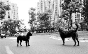 杭州一小区被投放火腿肠样毒物,一个多月十条宠物狗误食死亡