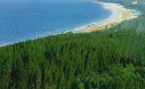 沿海防护林建设工程规划公布:红树林将恢复造林近5万公顷