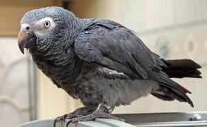 华盛顿公约秘书处谈兰花案鹦鹉案:乐见中国从严保护公约物种