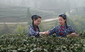 西湖龙井、信阳毛尖等获评中国十大茶叶区域公用品牌