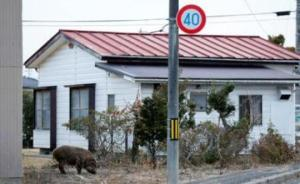 日本研究:福岛核事故后放射性微颗粒物飘至东京