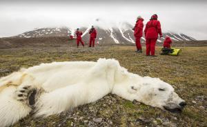 """2017年6月2日,美国总统特朗普于当地时间6月1日正式宣布美国退出《巴黎协定》,该决定遭到多方反对和抗议。气候变化问题再次成为世界关注的焦点。2013年8月,北冰洋斯瓦尔巴特群岛惊现一只瘦成""""毛毯""""的北极熊尸体,这只本该具有超强大捕食能力的巨型动物,在一场北上搜寻海豹的绝望之旅中活活饿死。  本图集图片均来自 视觉中国"""