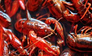 低门槛高利润吸引资本涌入小龙虾产业,食安环节仍有待规范