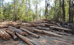 四川男子无证采伐获刑后,还被责令在公园种树并管护两年