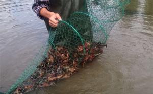 华农硕士为照顾父母放弃万元月薪回乡创业,网络直播卖小龙虾