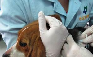 农业部:2020年狂犬病免疫犬建档率拟达到100%