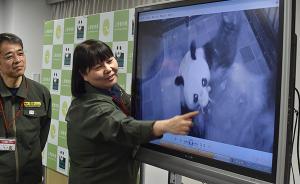 """东京上野动物园大熊猫""""真真""""再次产崽,市长第一时间报喜"""