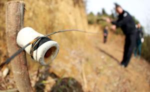 河南一男子私设电网捕野猪,未料老父亲上山采蘑菇触电身亡