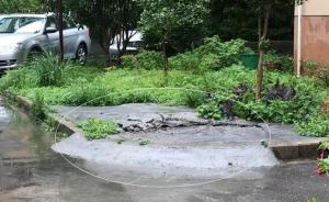 """女婿有车没车位,杭州丈母娘破坏小区绿化带""""造""""车位装地锁"""