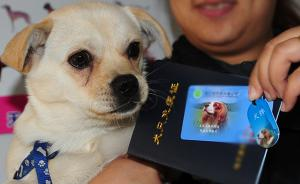 上海:养犬不办证、犬扰民等有望被纳入个人征信系统