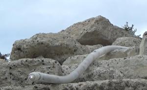 日本造8米蛇形机器人,用于灾后拍摄