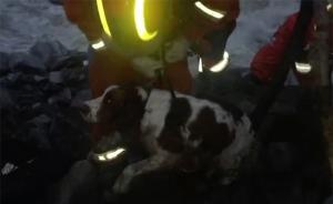 茂县垮塌:救援人员跨河夜运搜救犬