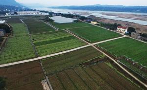农业部官员详解当前土地制度改革:与联产承包有四方面区别