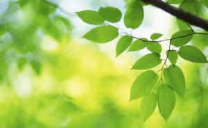 夏季达沃斯公布年度全球十大新兴技术:量子计算人工树叶入围