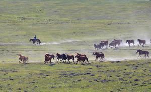 财政部:今年中央财政安排187.6亿元支持草原生态保护