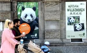 旅德大熊猫让柏林狂热:十种竹子任挑,住全自动灯控温控豪宅