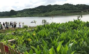 """【共舞长江经济带】贵州""""治水经"""":让生活污水远离母亲河"""