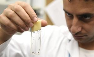 谷歌兄弟公司计划释放两千万只改造蚊子,欲抑制寨卡病毒
