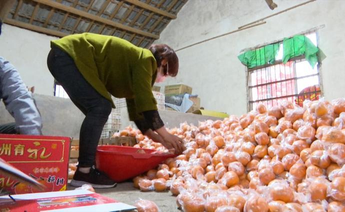 感恩汶川地震受助,他向武汉捐3万斤柑橘
