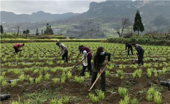 农业农村部:防疫情保春耕,全力打好小康之年农业丰收攻坚战