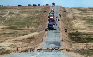 直播录像丨人车避让、全程监控,直击可可西里藏羚羊回迁之路