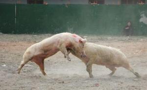 环保督察或改变此轮猪周期时间跨度:猪价已逆势反弹3个月