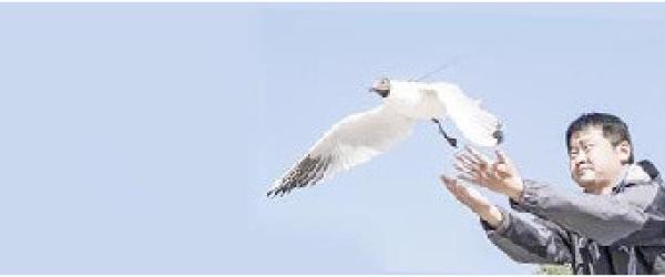 昆明迎接红嘴鸥越冬将采购鸥粮30吨,设62处免费投喂点