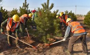 """雄安""""千年秀林""""工程栽下第一棵树:植树优先招募本地居民"""