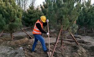 雄安新区千年秀林工程栽下第一棵树